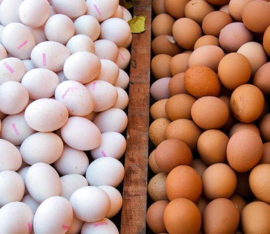 Jajka vs Cholesterol