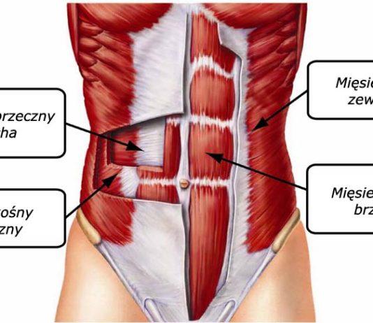 ABS - mięśnie brzucha